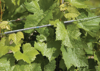 VINE-LINE® Connector
